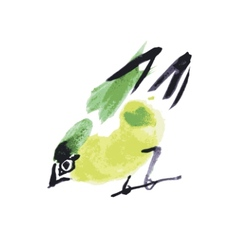 watercolor drawing bird robin at white background vector image