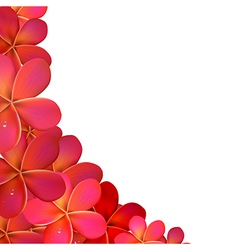 Frangipani Frame With Water Drops vector image vector image