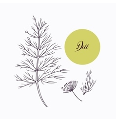 Hand drawn dill branch with leves isolated on vector image vector image
