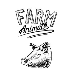 Farm animal head of a domestic pig pork logo or vector