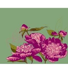 Peony flowers llustration vector