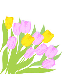 Pink and yellow tulips vector