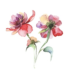 The spring flowers watercolor vector image