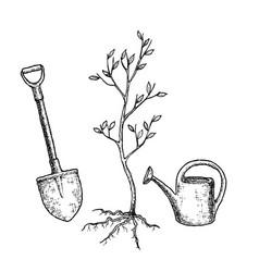 Sketch tree planting vector