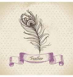 Vintage background with peacock feather vector