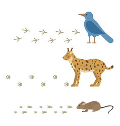 animal footprints include mammals and birds foot vector image