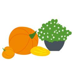 harvest festival pumpkin and plant melon vector image