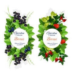 natural garden berry fruits harvest vector image