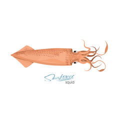 Squid red color design flat red vector