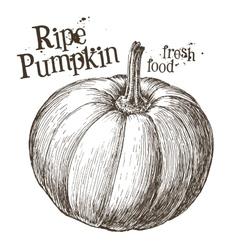 pumpkin logo design template fresh vector image