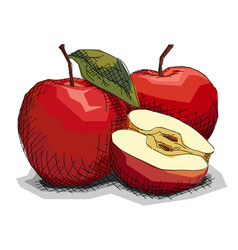 Drawing fruit red apples vector