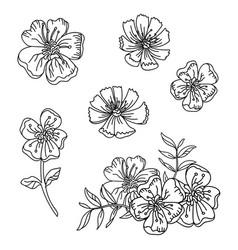 line art set buttercup flowers vector image