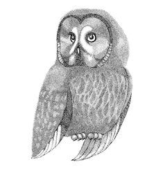 sketch owl drawn with pen and ink vector image