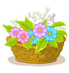 basket with flowers cosmos vector image vector image