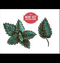 collection of hand drawn colored mint vector image