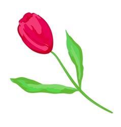 Crimson tulip vector image