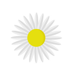 daisy flower icon vector image