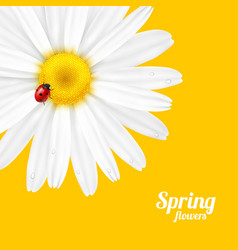 Spring flower and ladybug vector