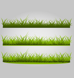 variety of grass vector image