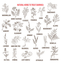 Best medicinal herbs to treat diarrhea vector