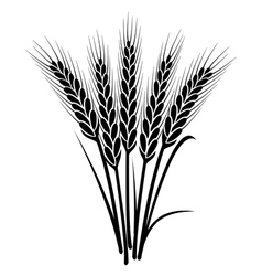 bunch of wheat ears vector image