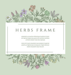 Drawing botanical herbs text frame vector