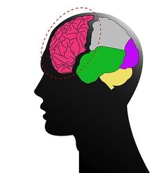 Head brain vector