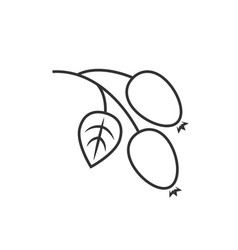 Rosehip outline icon vector