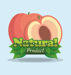 apricot natural product label vector image