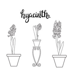 Sketch hyacinth spring flowers and lettering vector