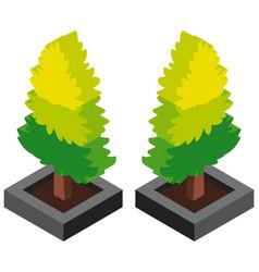 3d design for pine tree vector