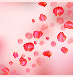 A lot of falling red rose petals on pink vector