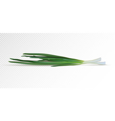 bunch of fresh green onions vector image