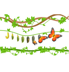 Butterfly life cycle colorful flat vector