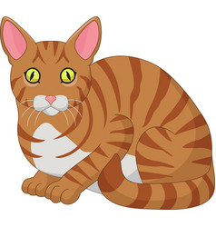 cartoon funny cat isolated on white background vector image
