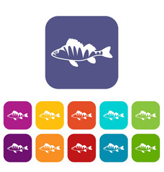 European perch perca fluviatilis icons set vector