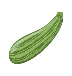 Fresh zucchini isolated on white background vector