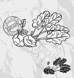 hand drawn kohlrabi vector image