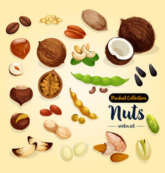 Nut bean and seed set superfood design vector