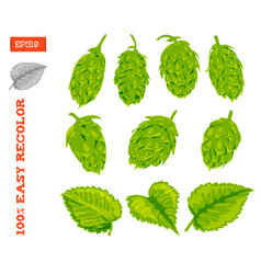 Set of cones and leaves of hop plant isolated on vector