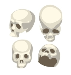 White human skull from four different angles vector image vector image