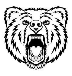 Growling bear vector image