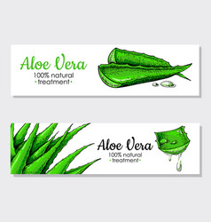 Aloe vera hand drawn banner natural vector