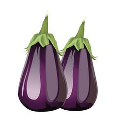 Fresh eggplants vegetables healthy icons vector