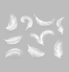 Realistic feathers white bird falling feather vector