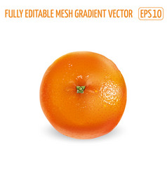 Ripe unpeeled orange on a white background vector
