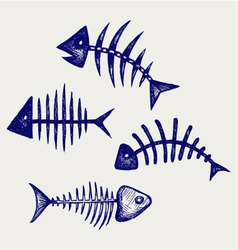Fish bone vector image vector image
