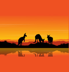 landscape kangaroo on the river silhouette vector image vector image