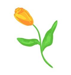 Yellow tulip sketch vector image vector image