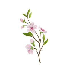 Almond branch with flowers and buds vector